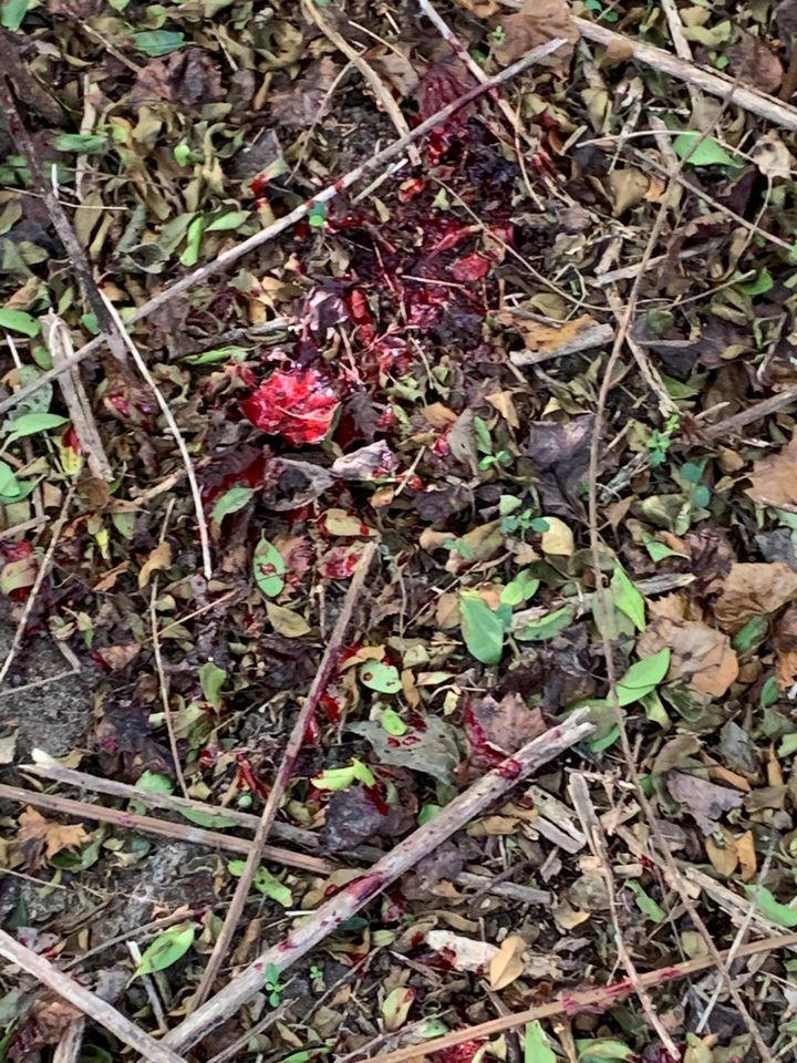 coyote blood trail 1.jpg