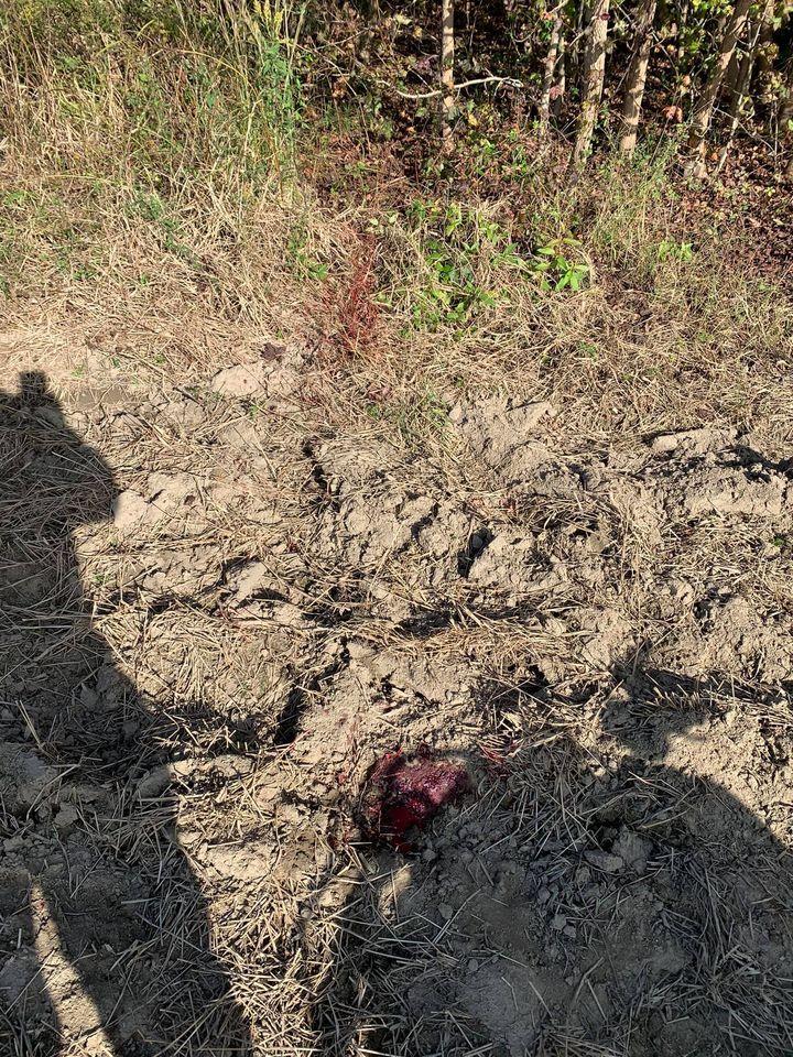 coyote blood trail.jpg